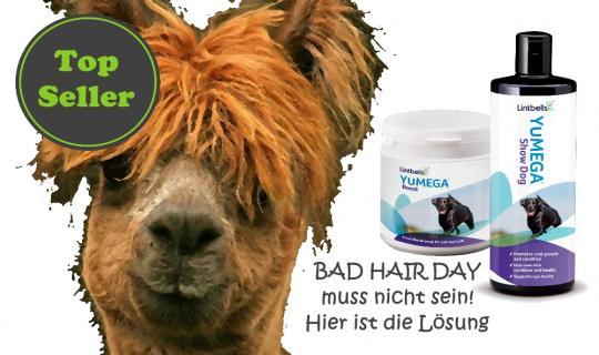 Lintbells Mauvais Cheveux Kombi offre spéciale